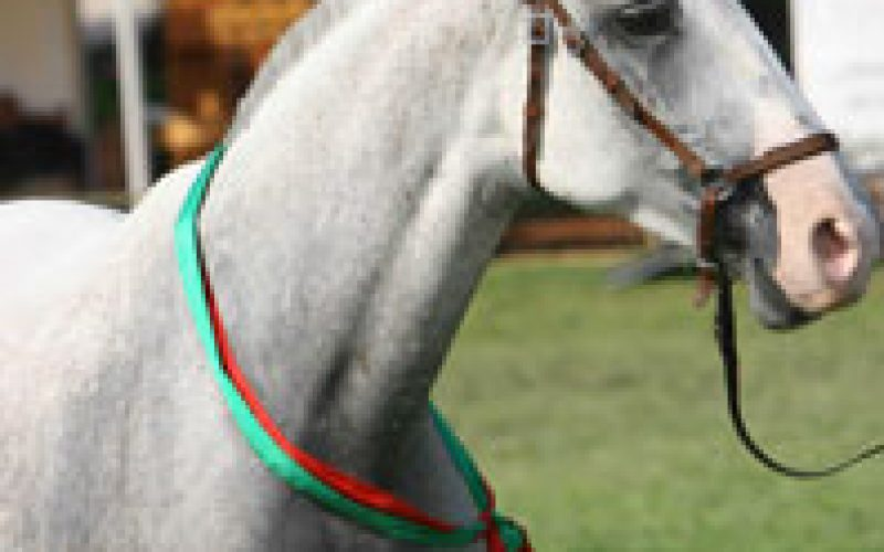 Reinspecção de animais da raça Lusitana