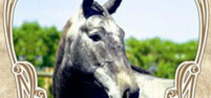 5ª Festa de Campo, da Lezíria e do Cavalo