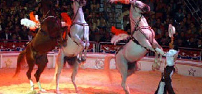 Dois animais do circo Cardinali envenenados