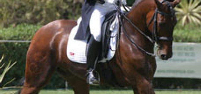 FAR aposta no turismo equestre, corridas e no melhoramento da Raça Lusitana