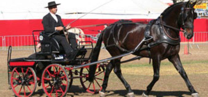 Colecção Interagro 2008 – Leilão de Cavalos Lusitanos