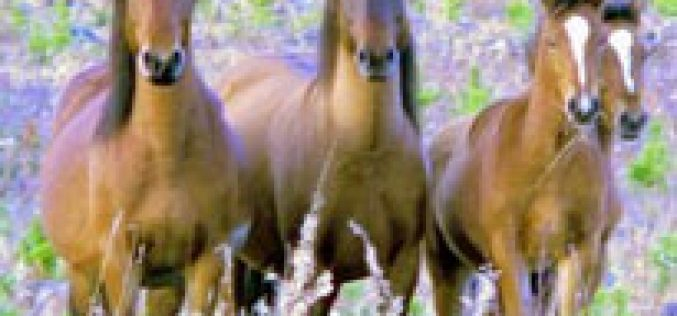 Woman's divorce deal includes maintenance for horses