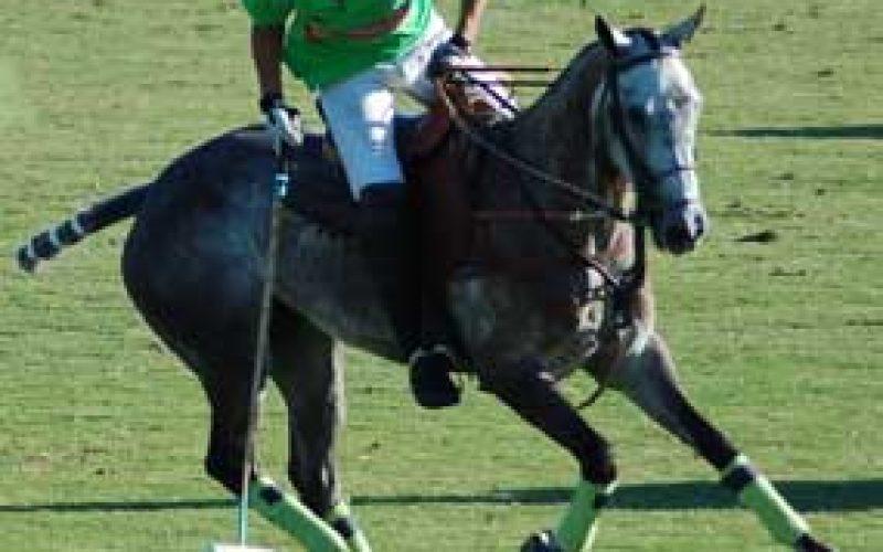 Tiago e Diogo Gallego no maior torneio de Polo do mundo