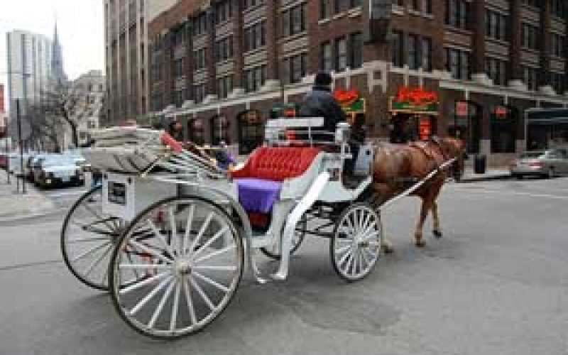 Carriage horse hit by truck and killed in Rome