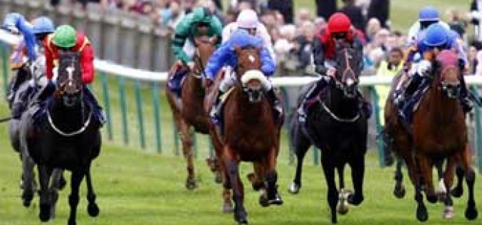 Wetherby Racecourse in spotlight after horse fatalities