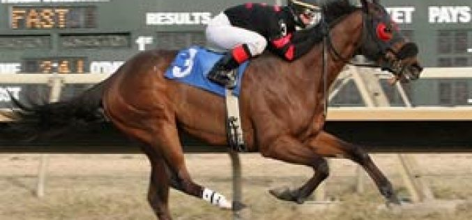 US jockey apologises after starting a fight mid-horserace