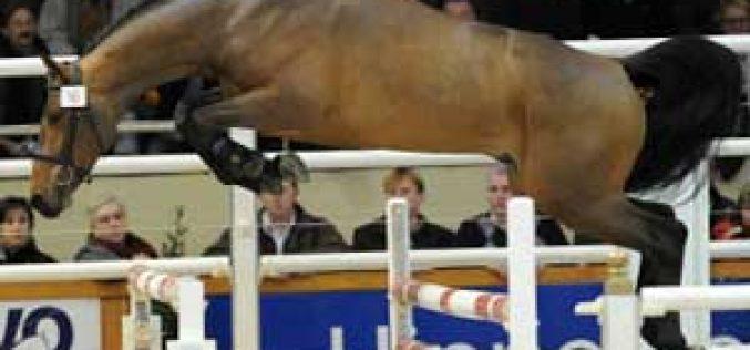Hermes de Mariposa Champion BWP 2010
