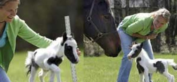Einstein – The Smallest Horse Bids for World Record