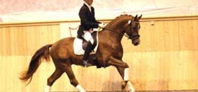 Danish Warmblood Spring Auction 2011