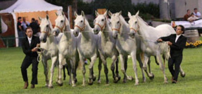 23º Festival Internacional do Cavalo Puro Sangue Lusitano em Lisboa
