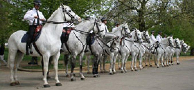 Cavalos 'escolhidos a dedo' para o cortejo real