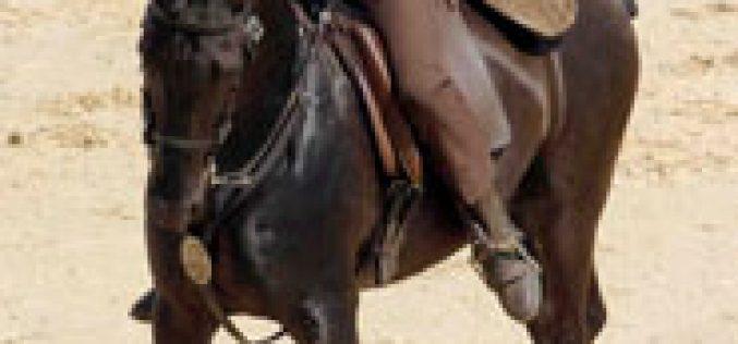 4ª Jornada do Campeonato Nacional de Equitação de Trabalho – Santarém