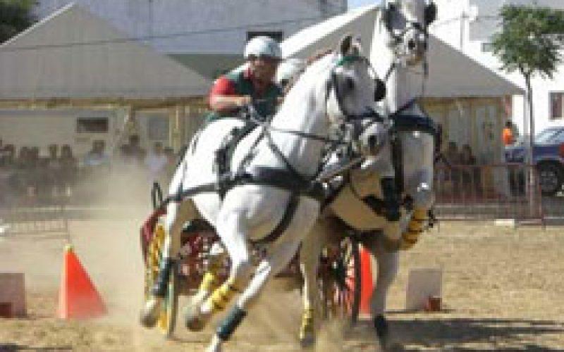 Derby de atrelagem realiza-se sexta feira em Tavira
