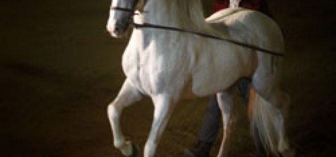 Álvaro Domecq e seus cavalos recebem o Papa