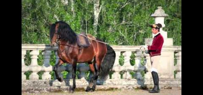 Lusitanos in Focus