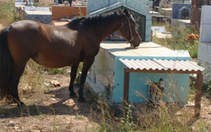 Cavalo visita campa diariamente…