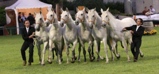Associações Estrangeiras promovem o Cavalo Lusitano