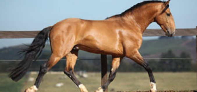 The 2011 Interagro Collection Auction & 12th Annual Interagro Foal Auction