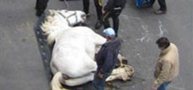 Cavalo morre em plena via de Nova Iorque
