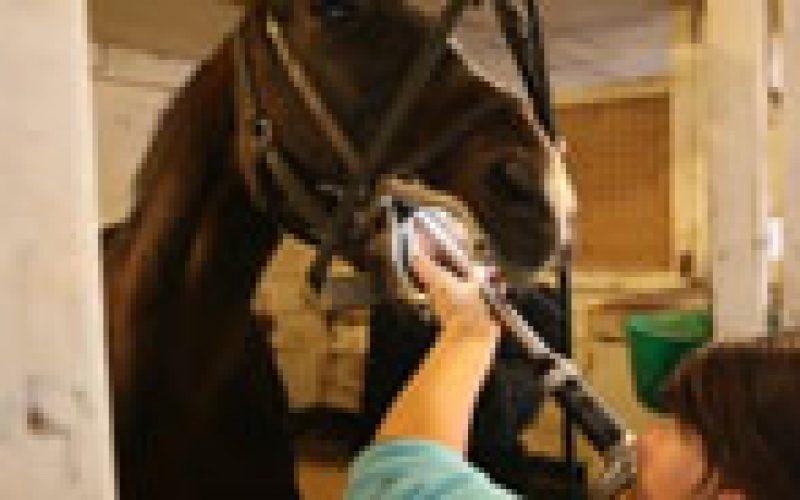O cavalo e os dentes