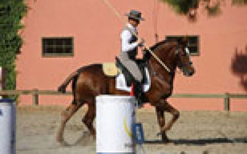 Mundial de Equitação de Trabalho na TV