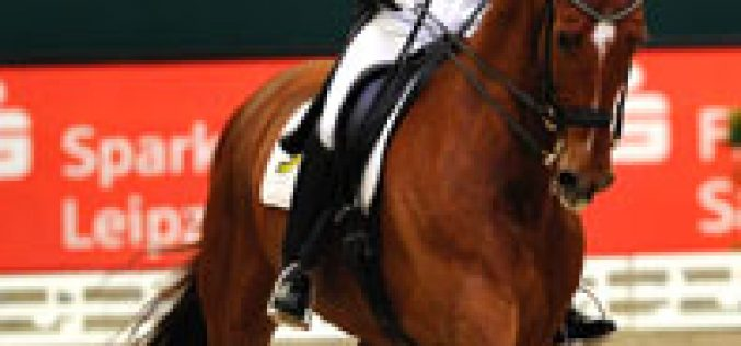 KWPN Dressage Horse – and Jumper Breeders: the Best in the World