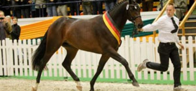 Häwelmann sold for 140 000 euros