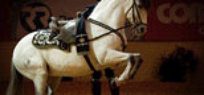 O esplendor da Arte Equestre