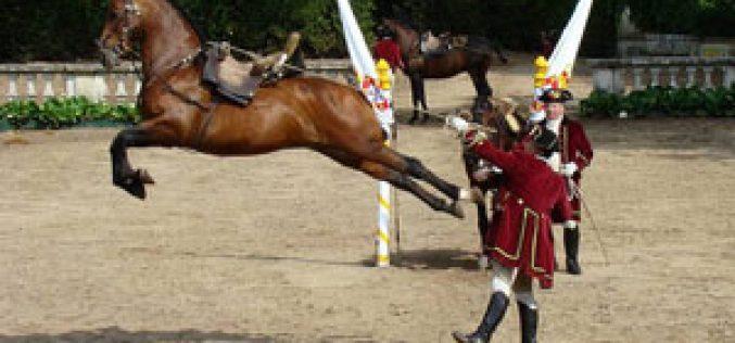 Cavalo em noite de arte e beleza hoje no Campo Pequeno