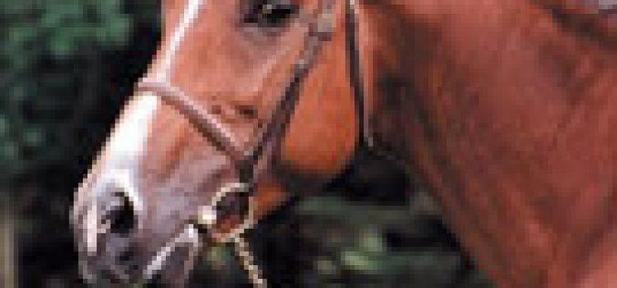 60 Cavalos SF vão a Leilão em Chazey-sur-Ain