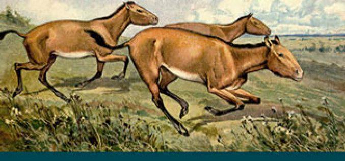 Estudo revela antepassados de cavalos encontrados em Aragão