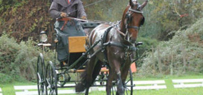 Saltos, Atrelagem e Raides animaram a Capital do Cavalo