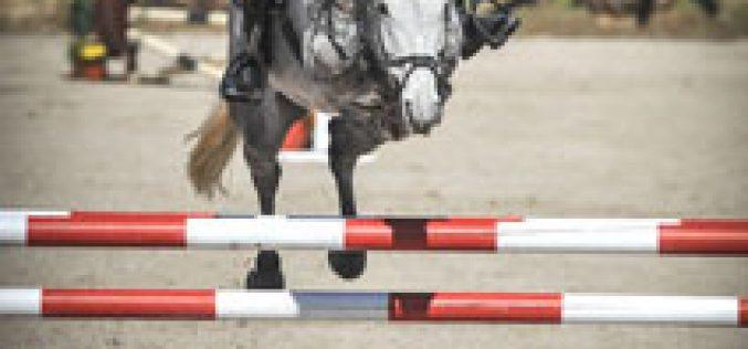 Terminaram as provas para cavalos novos: António Frutuoso de Melo em décimo terceiro