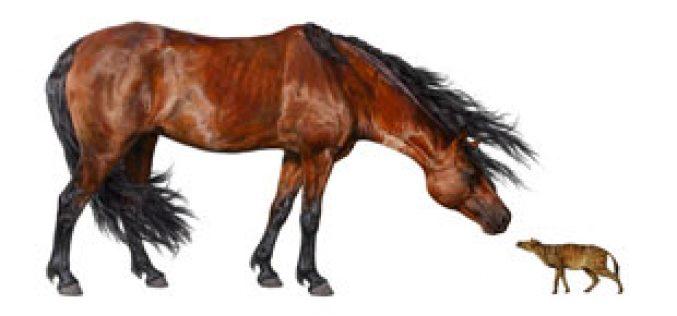 Alterações climáticas há 56 milhões de anos resultaram em cavalos do tamanho de gatos