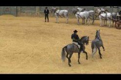 Alta escola cavalo PRE na Praça de Touros de Ronda em Espanha