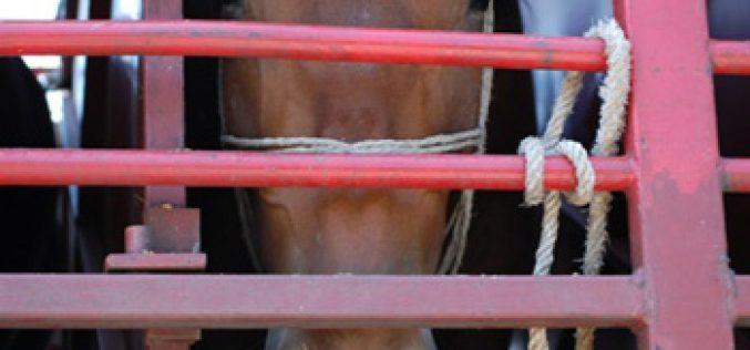 Petição contra o transporte desumano de cavalos