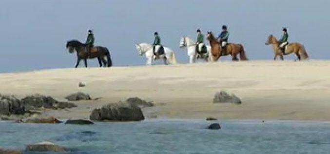 Itinerários de Turismo Equestre – Porto e Norte  (vídeo)