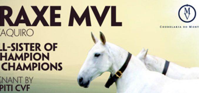 """Faltam 2 dias para o envio das propostas de aquisição da égua """"Praxe MVL"""""""