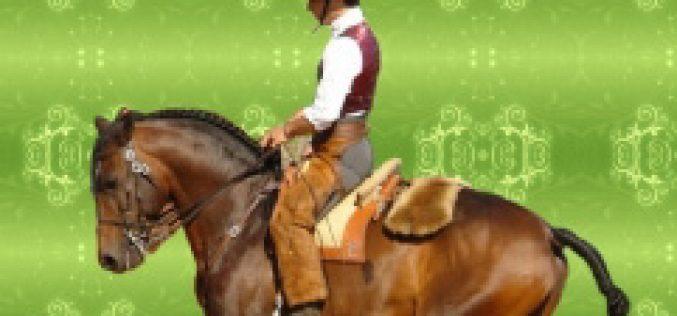 II Festa do Cavalo estreia novo picadeiro de São Domingos de Rana
