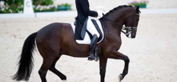 Edward Gal vai contar com 2 cavalos para Londres'2012