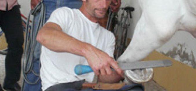 Workshop sobre Arranjo de Cascos