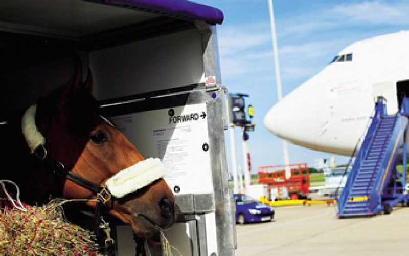 Challenges facing equine atletes travelling to Olympics