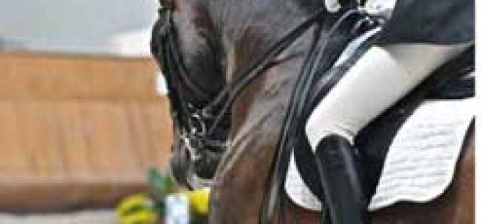 Dressage na Feira do Cavalo de Estoi