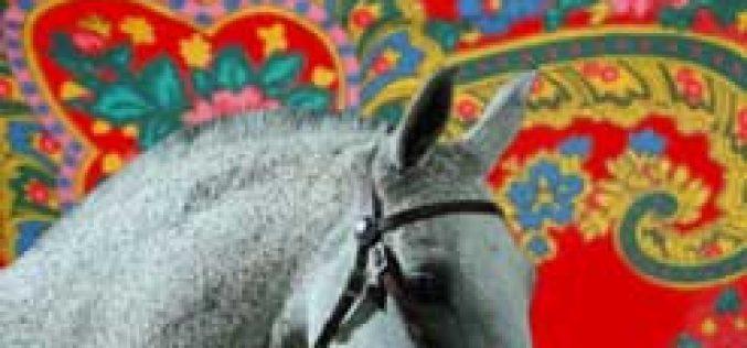 Feira do Cavalo de Ponte de Lima 2013
