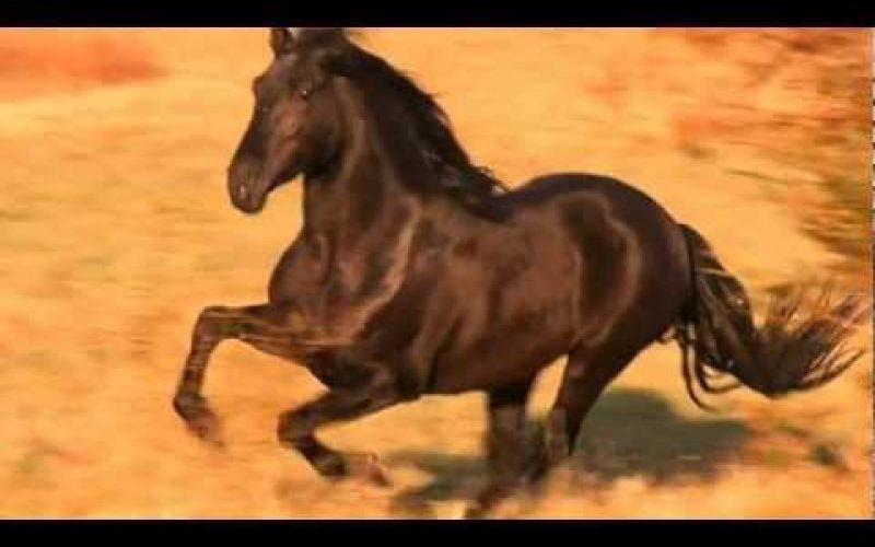 Hempfling e o Garanhão PRE – Para quem gosta de cavalos.