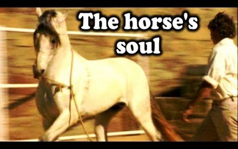 Imagens de cavalos em Liberdade – Ferdinand Hempfling