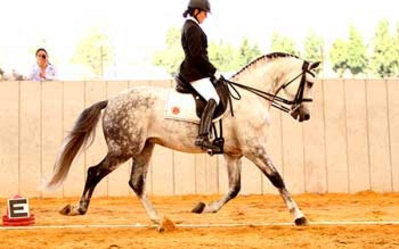 Resultados do III Festival do Cavalo Lusitano, na Colômbia