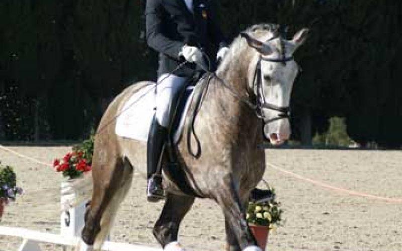 «Dragão das Figueiras» ganha a final para cavalos de 5 Anos
