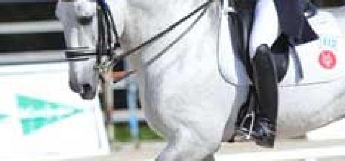 6 Cavaleiros nacionais vão disputar o Grande Prémio no Circuito Hípico do Sol