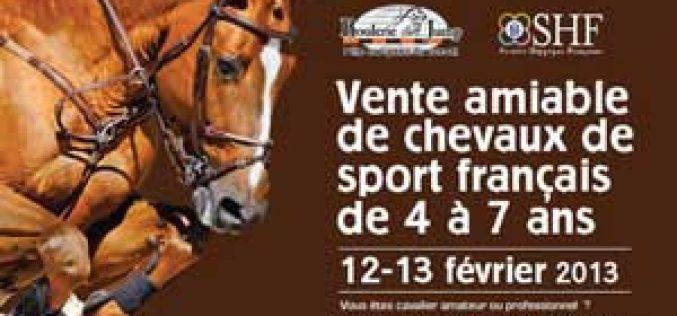 Venda de cavalos SF de S.O. no Pôle Européen du Cheval
